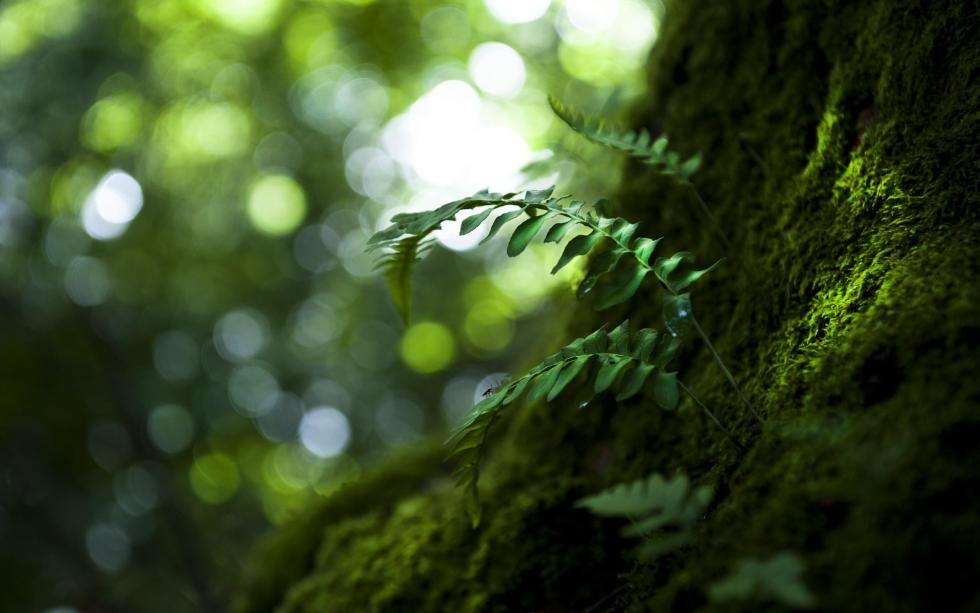 Beginning Mindfulness Meditation (Six-Week Series)