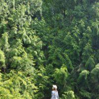 Close to Nature: Retreat with Amy Minato