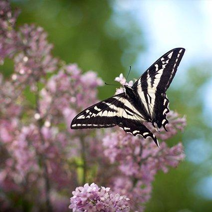 Embracing Change: Transitions Retreat at Yasodhara