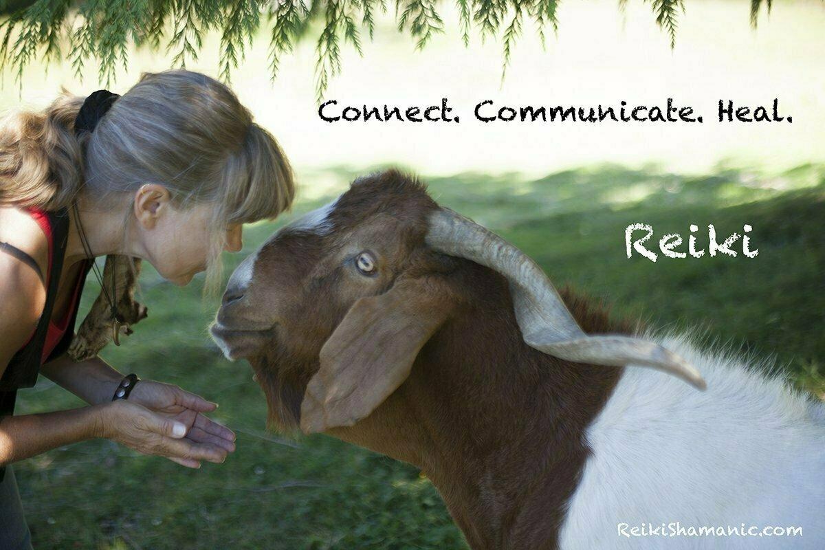 Worldwide Reiki For Animals Level 1 Teleclass